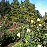 Photo taken at International Rose Test Garden by Erin B. on 10/18/2012