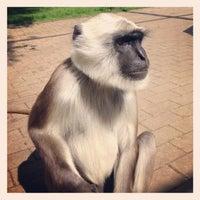 Photo taken at Serengeti Park by Alex Q. on 5/28/2013