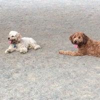 Photo taken at Baron Cameron Dog Park by Jen G. on 9/21/2013