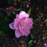 Photo taken at Bishop Lucey Park (The Peace Park) by Lena on 4/20/2014