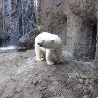 Photo taken at Polar Bear Museum by Shinpei Y. on 7/27/2013