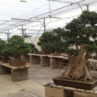 Photo taken at Mistral Bonsai by Jordi G. on 1/2/2015