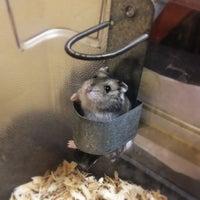Foto scattata a PetSmart da taylor il 11/5/2012