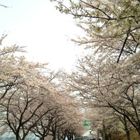 Photo taken at 남해 왕지 벚꽃길 by NANA☆ K. on 3/30/2013