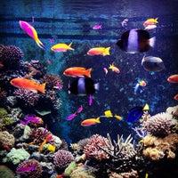 Photo taken at S.E.A. Aquarium by Русанов М. on 1/14/2013