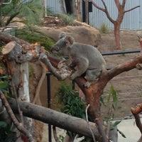 5/24/2013 tarihinde Matthew C.ziyaretçi tarafından Koala Exhibit'de çekilen fotoğraf