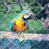 Photo taken at Parque de las Leyendas by Ronny Anderson I. on 2/4/2013