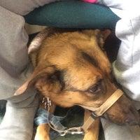 Photo taken at Milton Veterinary Hospital by Regina Renee H. on 3/31/2014