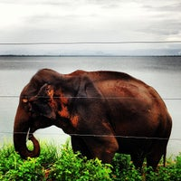 Photo taken at Wild Elephas by Ilya F. on 2/12/2013