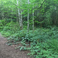 Photo taken at Big Tree Ridge Trailhead - Cougar Mountain by Doug V. on 5/23/2015