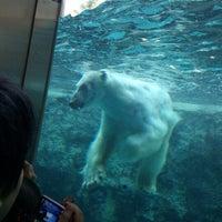 Photo taken at Polar Bear Museum by kerorina☆ on 5/8/2013