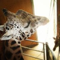 Photo taken at Noah's Ark Zoo Farm by Anna on 7/11/2013