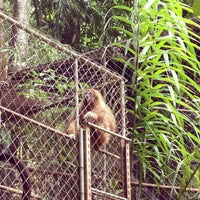 Photo taken at Gibbon Rehabilitation Project by Svetlana B. on 4/18/2013