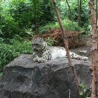 7/9/2016 tarihinde Max S.ziyaretçi tarafından Central Park Zoo - Snow Leopard'de çekilen fotoğraf