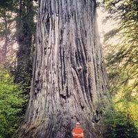 Photo taken at Big Tree by Joshua C. on 4/29/2013
