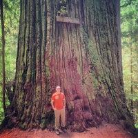 Photo taken at Boy Scout Tree by Joshua C. on 6/17/2013