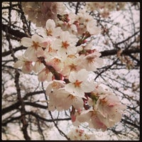Photo taken at 里見公園 by butakao on 3/20/2013