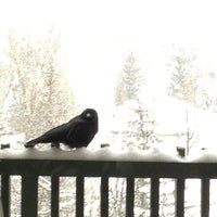 Photo taken at Evergreen Lodge at Vail by Colleen T. on 3/1/2013