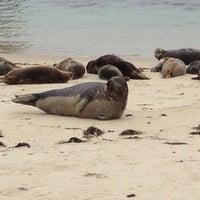 Foto tirada no(a) Seal Rocks por Lindsey W. em 3/30/2013