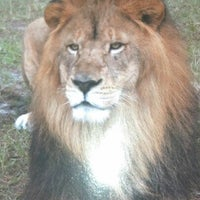 Photo taken at Lion Country Safari by Nadine G. on 9/28/2012