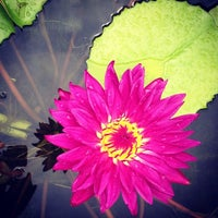 Photo taken at American Aquatic Gardens by David A. on 8/25/2013