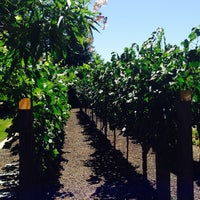 Photo taken at Frank Family Vineyards by Paco C. on 7/11/2014