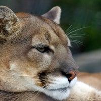 Photo taken at Saint Louis Zoo by Fletch on 4/23/2013