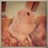 Photo taken at Pet Arabia, Amwaj by Edgar G. on 9/28/2012