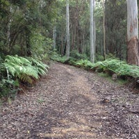 Photo taken at Blue Gum Tree Bush Walk by Supriya G. on 6/9/2013