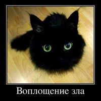 Photo taken at Cats&Dogs by 💋Снежуля Т. on 10/14/2012