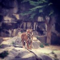 Photo prise au Tierpark Berlin par Anastasia M. le9/14/2012