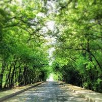 5/20/2013 tarihinde Eray K.ziyaretçi tarafından İTÜ Ağaçlı Yol'de çekilen fotoğraf