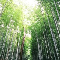 Photo taken at Arashiyama Bamboo Grove by Mooksy ♔. on 9/9/2015
