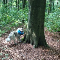 Photo taken at Hundewiese Volkspark by Oliver B. on 8/6/2014