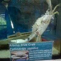 Photo taken at Gulf Specimen Aquarium by Richard C. on 8/9/2014