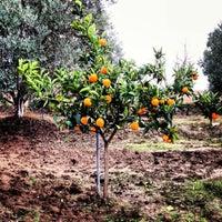Photo taken at Ali Baba' nın Çiftliği by Htc on 12/29/2013