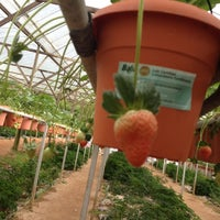 Photo taken at Big Red Strawberry Farm (Agro Tourism Garden) by Muznaem.A M. on 12/16/2012