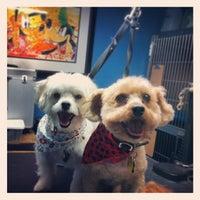 Sparky's Pet Salon