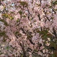 Photo taken at 宮の沢ふれあい公園 by Ryan T. on 4/27/2015