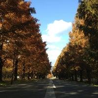 Photo taken at メタセコイア並木道 by とも on 11/24/2012