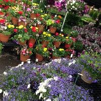 Photo taken at Westborn Flower Market by Erica💎 on 6/1/2013