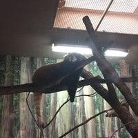 10/16/2016 tarihinde Monica S.ziyaretçi tarafından Red Panda Habitat'de çekilen fotoğraf
