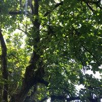 Photo taken at Mondragon, Northern Samar by Abby A. on 4/21/2013