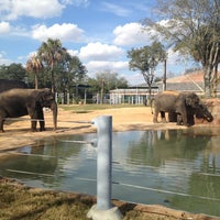 Foto tirada no(a) Houston Zoo por Scott J. em 1/20/2013
