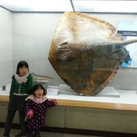 Photo taken at 부산해양자연사박물관 Busan Marine Nature History Museum by Seungchul L. on 12/22/2013