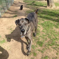 Photo taken at Carmichael Dog Park by Julie M. on 2/18/2013