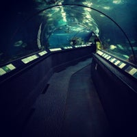 Photo taken at Shanghai Ocean Aquarium by José Ignacio S. on 12/10/2012