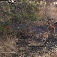 Photo taken at Mikumi National Park by Francesca B. on 8/25/2013