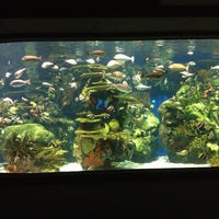 Photo taken at Ripley's Aquarium by Kate S. on 5/8/2013