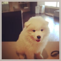 Photo taken at Metropolitan Dog Spa by Jessica B. on 5/10/2014